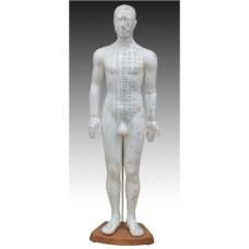 Модель для акупунктуры, мужчина 60 см
