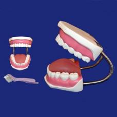 Модель ухода за зубами H11