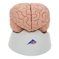 Модель мозга C17 (8 частей)