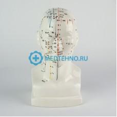 Модель для акупунктуры Голова, 20 см XC-507